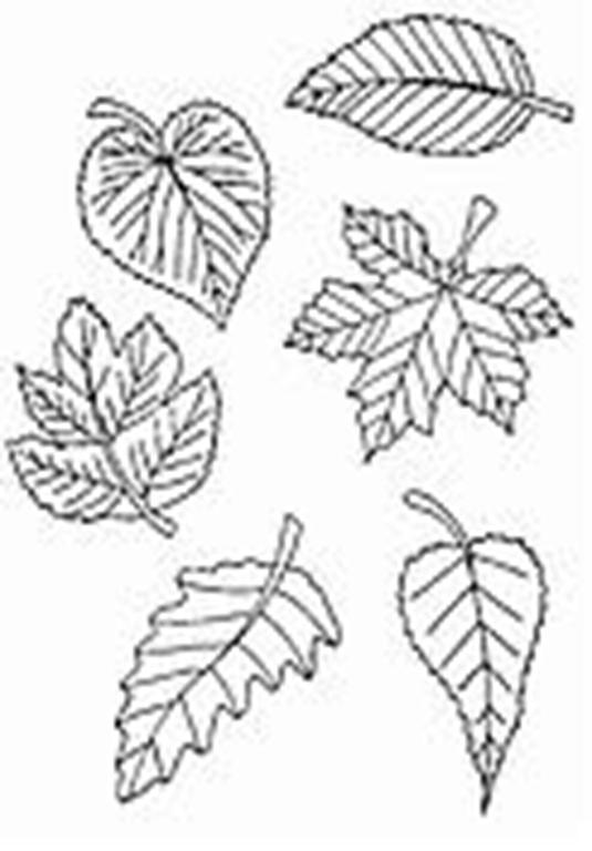 Planse de colorat toamna frunze dovleac ghinda - Dessin feuille morte ...
