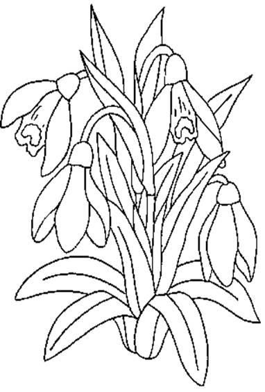 Flori De Desenat   Flori De Colorat Didactic   Fise De Lucru