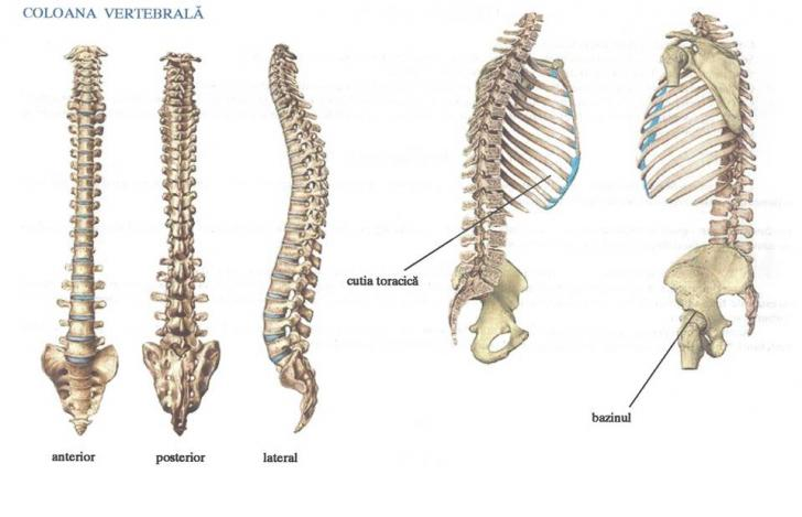 Ierburi pentru durere in articula?iile genunchiului