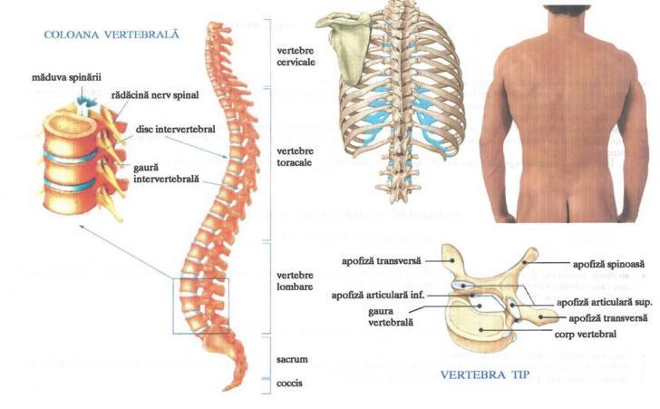 Tratamentul hemangiomului coloanei vertebrale toracice