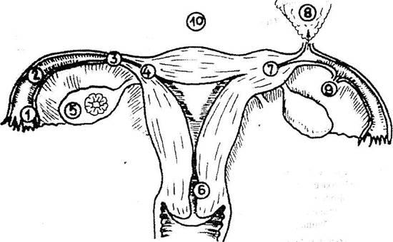 Sarcina Extrauterina Poze Sarcina Extrauterina Rupta